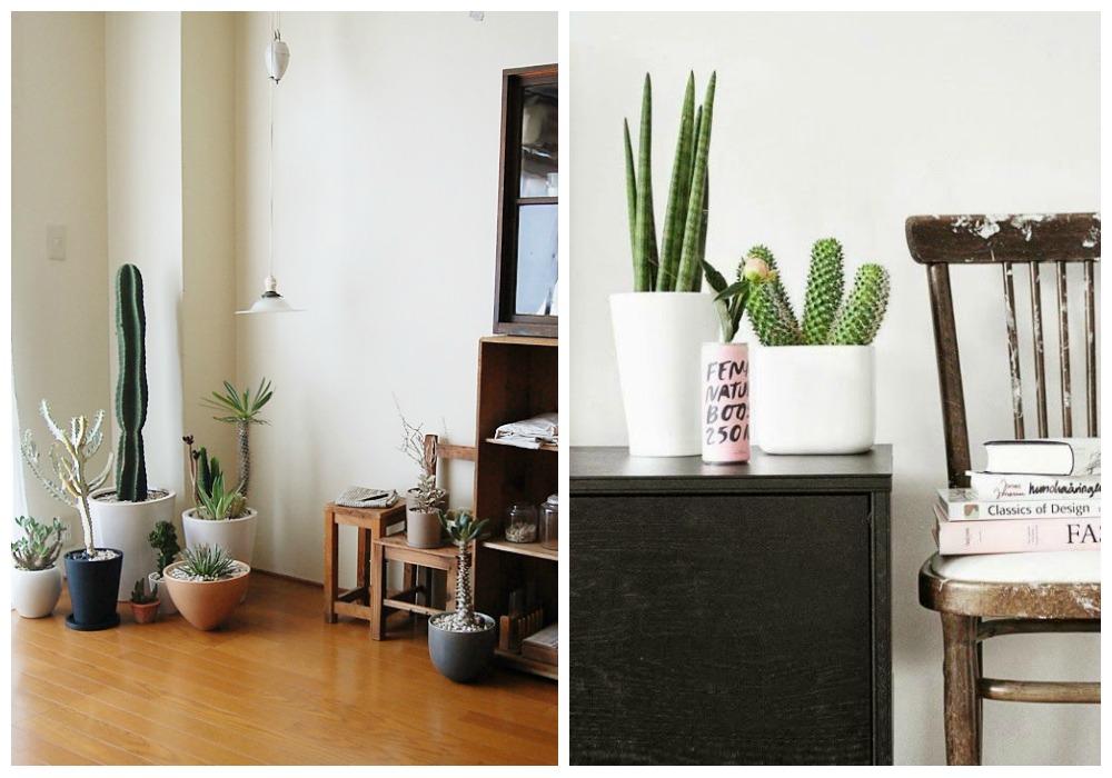 Decorar con cactus ecodeco mobiliario for Como decorar mi casa moderna