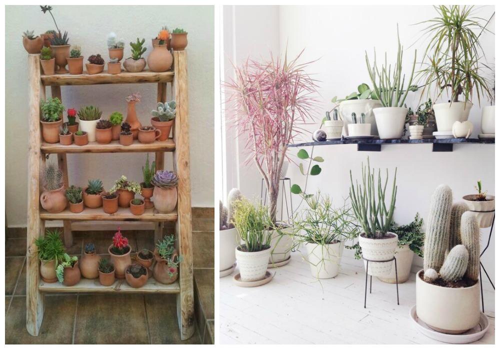 Decorar con cactus ecodeco mobiliario - Decorar con fotografias ...