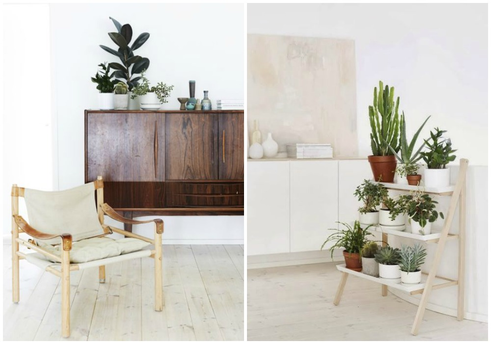 Como decorar con plantas for Decoracion con plantas en living